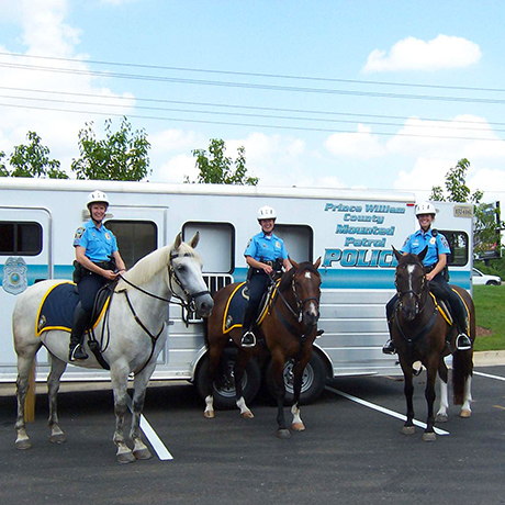 Ride Along with the Mounted Police