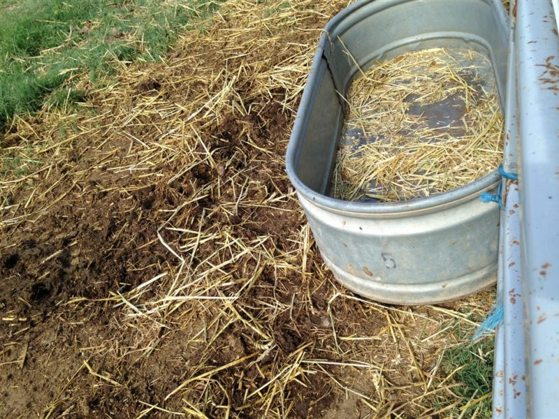 Importance of Hay Chaff